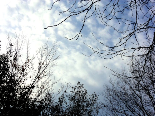View of sky with branches of trees framing it