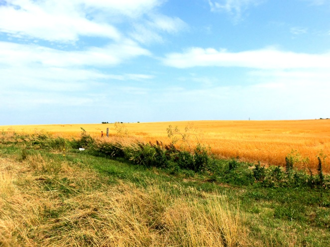 Wheatfield 3